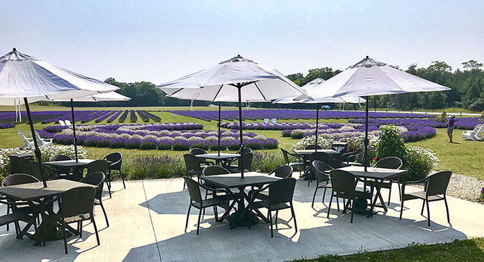 Fragrant Isle Lavender Farm, Shop & Le Cafe